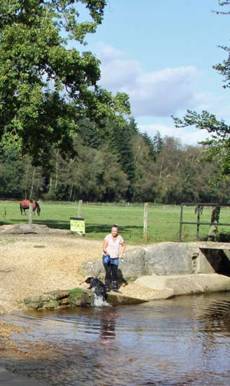 Cottages new forest pet friendly