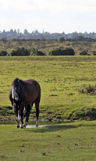 take your horse on holiday to the New Forest