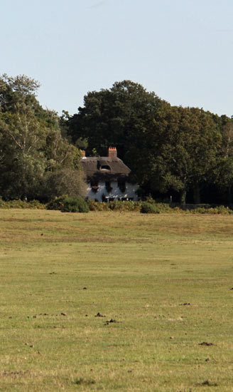 New Forest secluded cottages for holidays