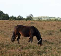 spot ponies during your self catering holiday in the new forest