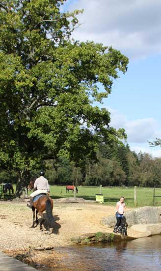 New Forest  self catering holidays